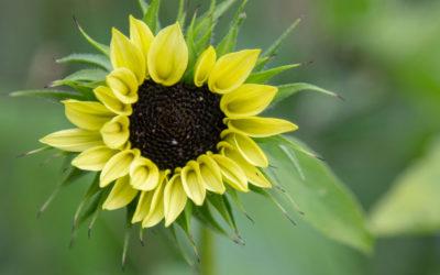 Et liv med overflodsbevidsthed – din naturlige tilstand