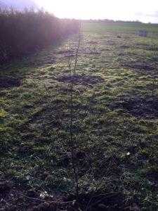 Imbolc skov hos Joyful Living